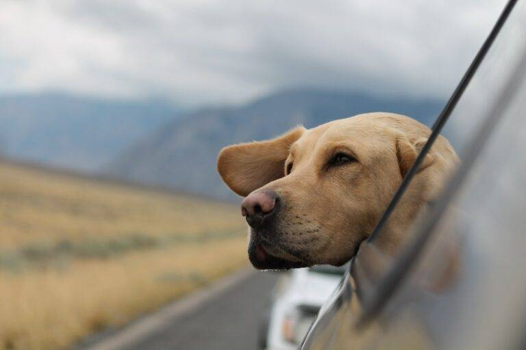 Prepare Your Car for a Ride with Your Dog https://smartcartrends.com
